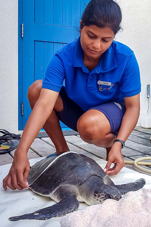 Juliet – Marine Savers internship Maldives (6) pilot whale