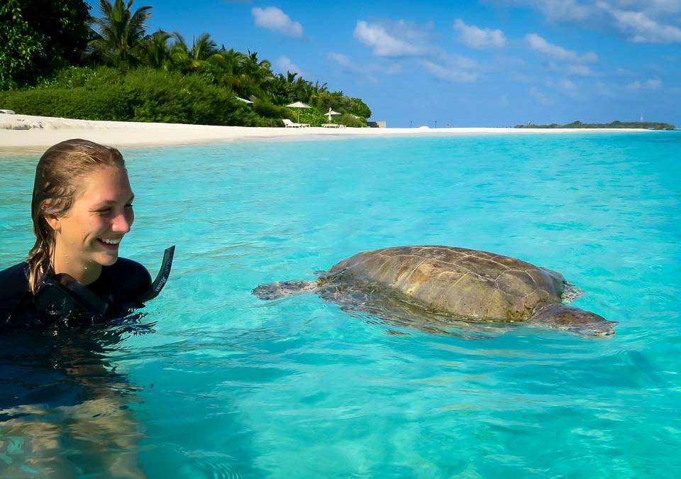 Lotte's Marine Life