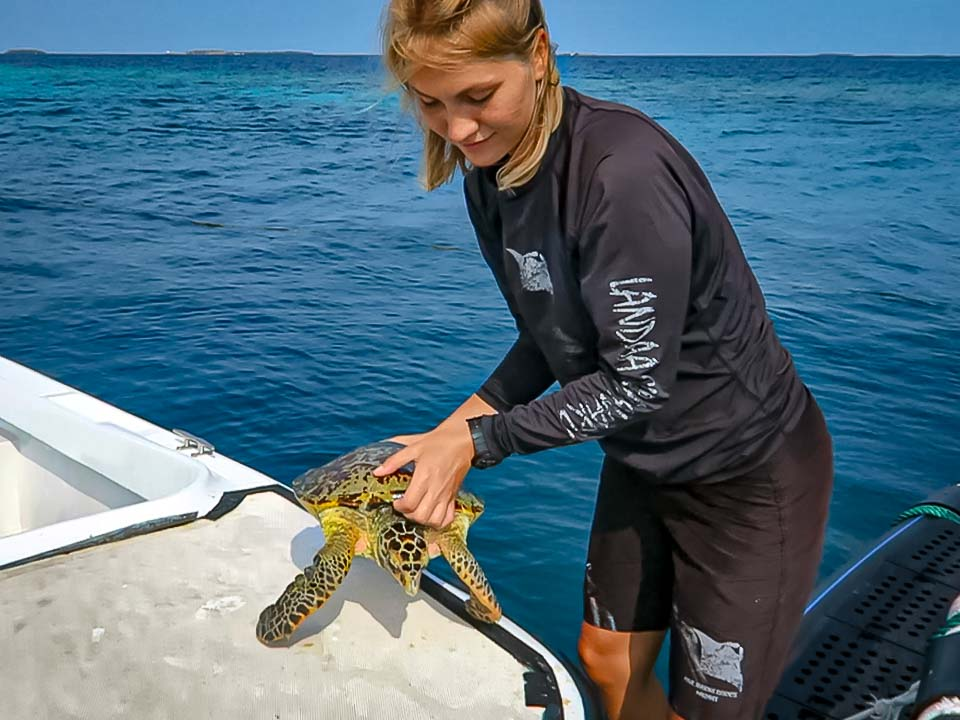 Luna rescue turtle Marine Savers Maldives