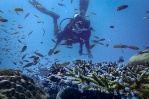 Olivia – marine internship Reefscapers Maldives diving on the reef (Olivia's Marine Biology Internship)