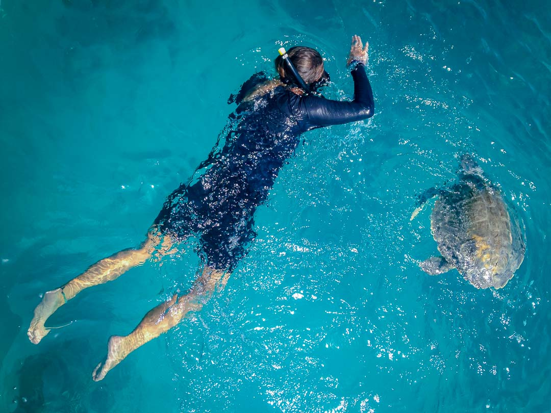 Varu rescue turtle Marine Savers Maldives (1)