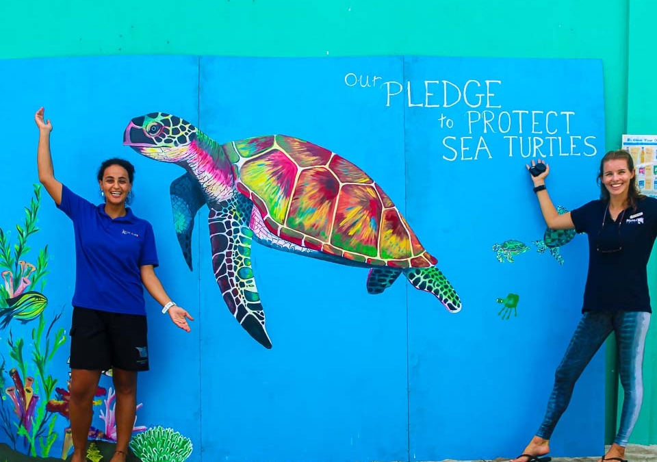 Turtle Tracks, Jolly Jellies & Fishy Tales