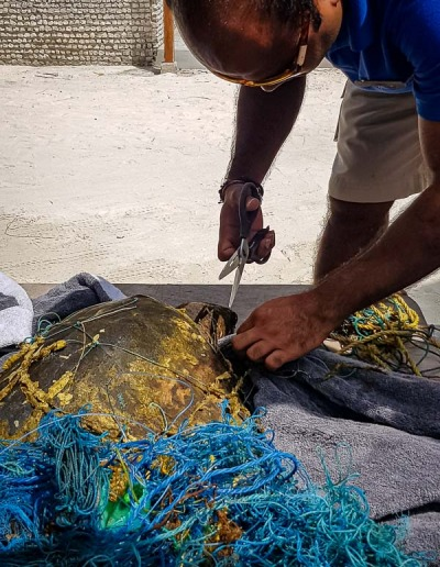 Luchi rescue injured Olive Ridley turtle Maldives