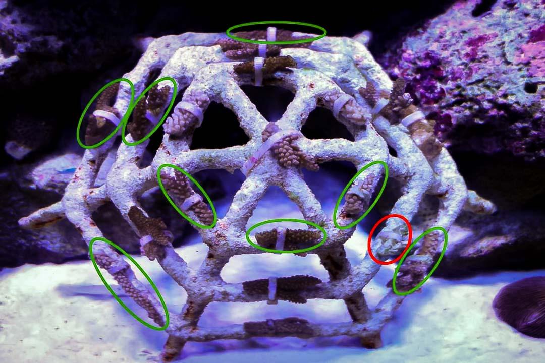 Aquarium-2 new mini coral frame