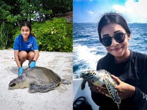 Maanee turtle conservation internship Maldives (collage)