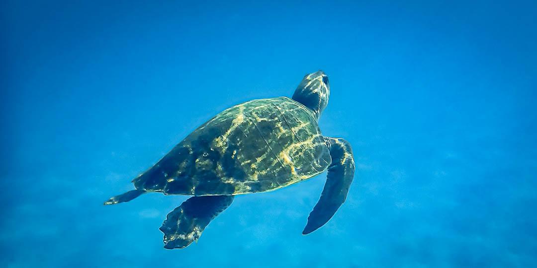 Georgia sea turtle care rehabilitation Maldives