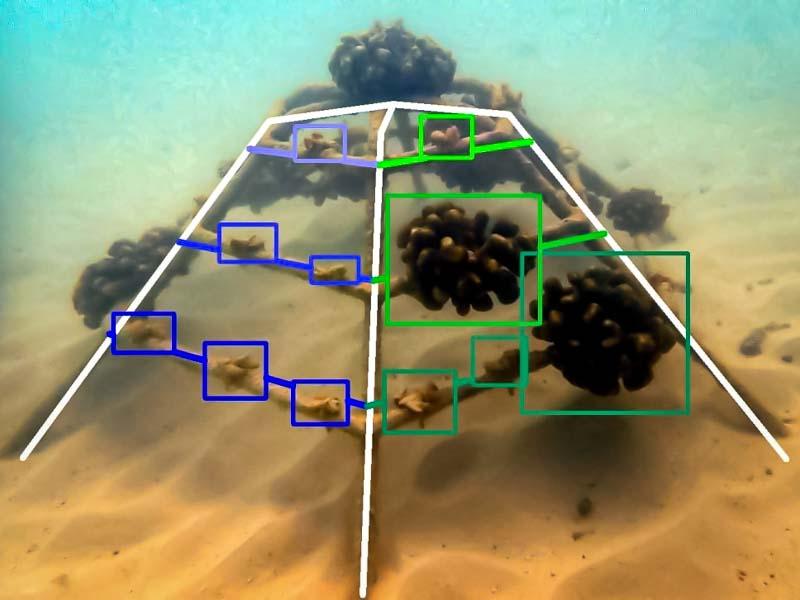 Reef monitoring catamaran AI frame analysis