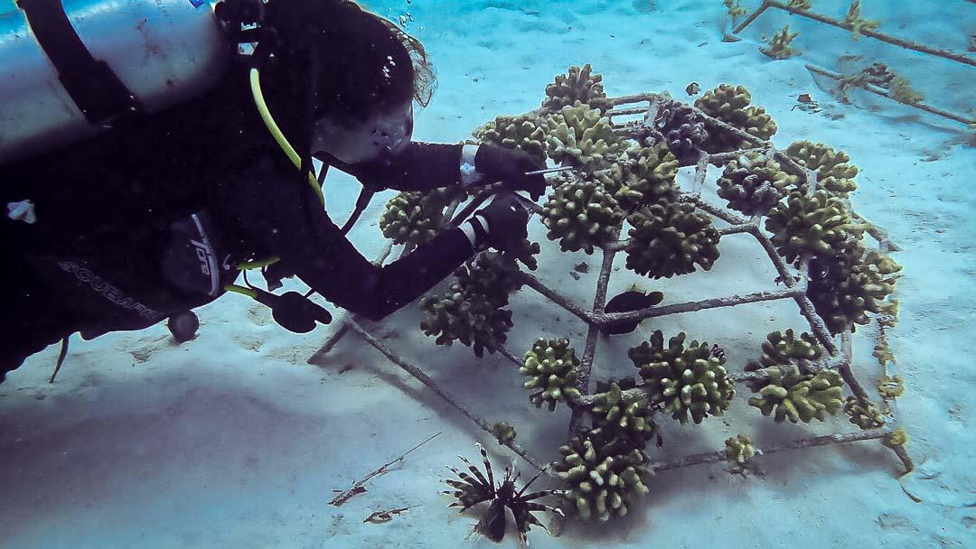 Ellie marine biology intern Maldives