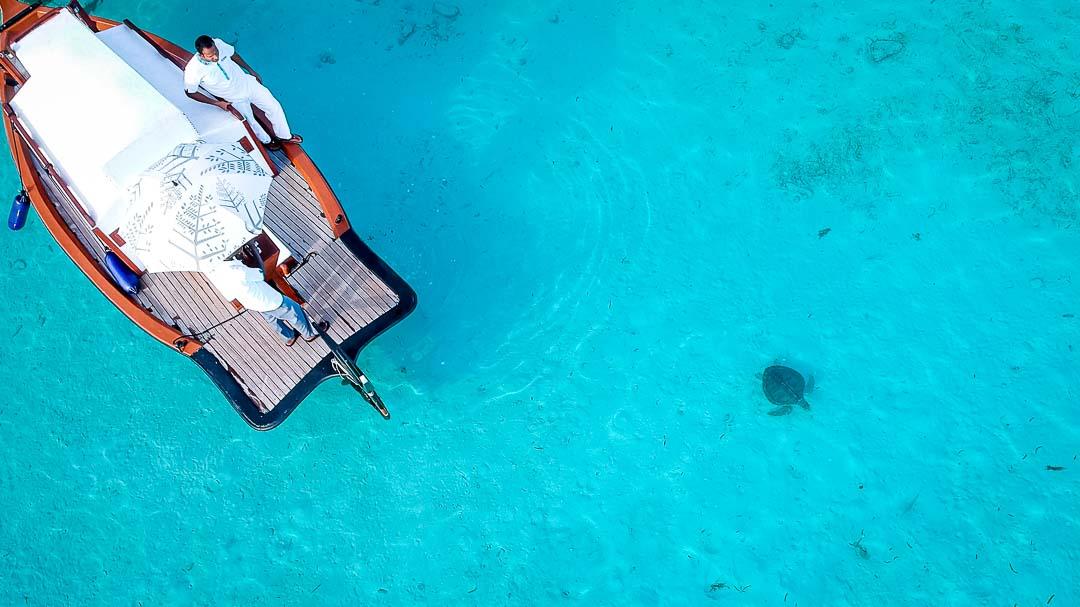 Fabia female Olive Ridley turtle rescue release Maldives