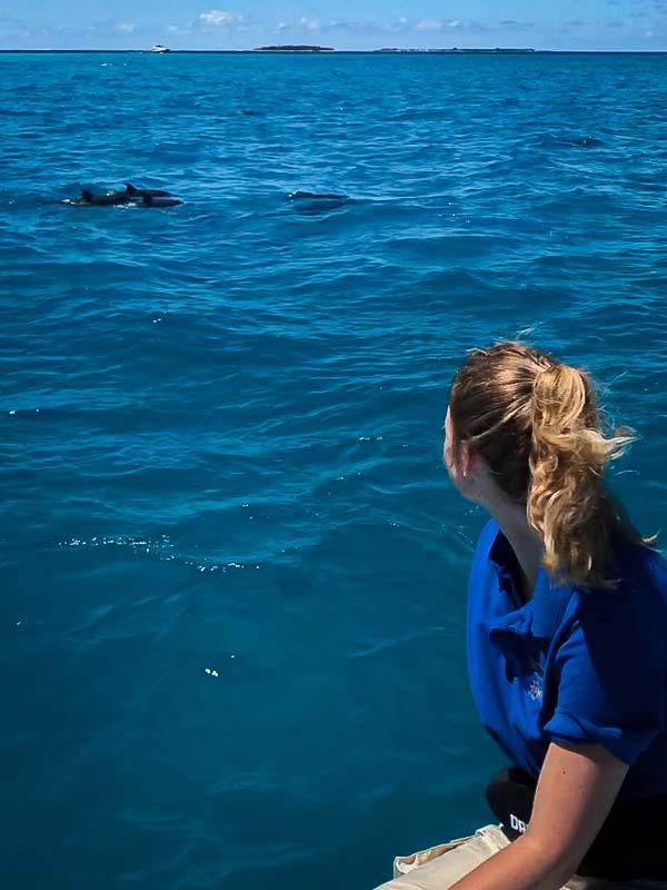 Dolphin spotting - Spinner backflip Maldives