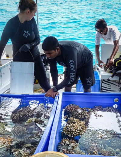Reefscapers coral rescue Gulhifalhu Maldives