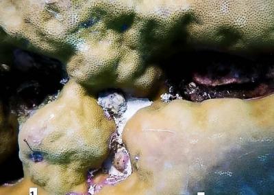 Reefscapers coral core experiment parent