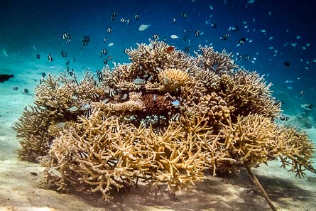 Mature Coral Frame Teaming With Life
