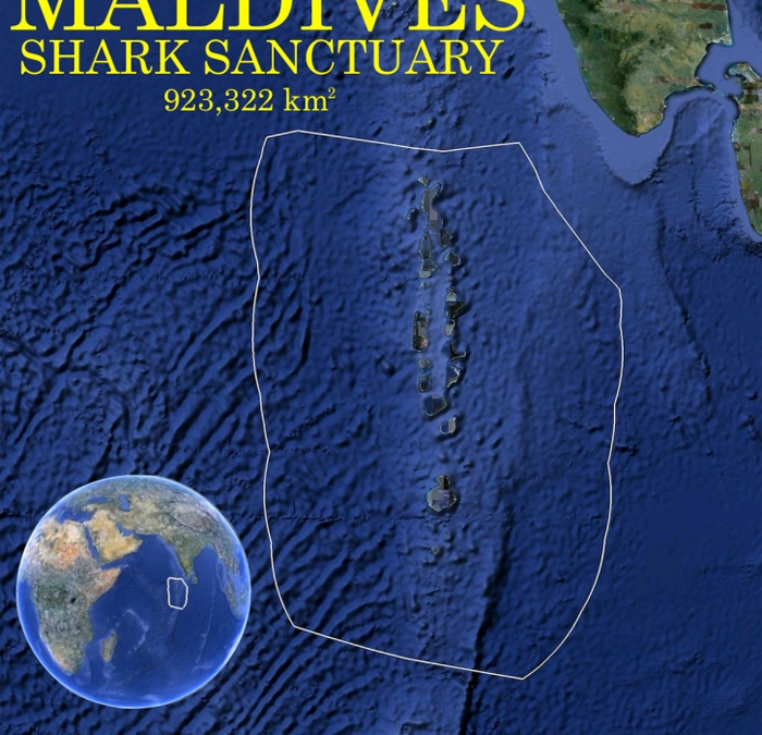 Indian Ocean shark sanctuary in the Maldives