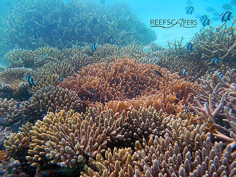 Documentary on Reefscapers wins International Award