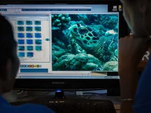 Maldives Turtle Identification project (Our Maldivian Sea Turtle Conservation Programmes)