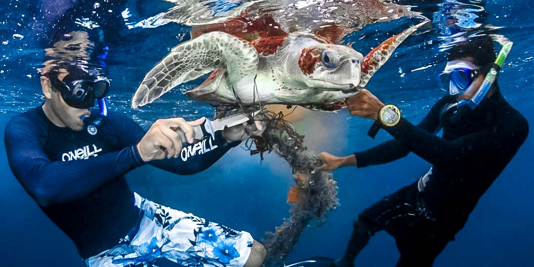 Olive Ridley rescue turtle 'Peggy'
