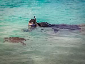 Maldivian Sea Turtle Conservation Programme – December Roundup