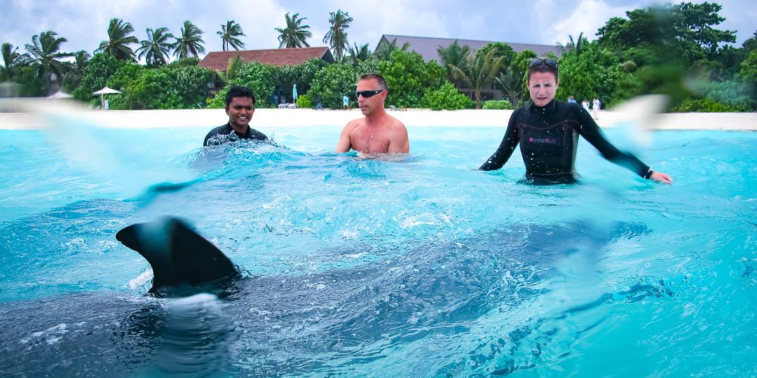 Stranded False Killer Whale (01) Marine Savers Maldives [1681]
