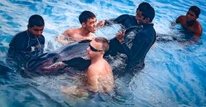 Stranded False Killer Whale (07) Marine Savers Maldives [1777] fb2 (False Killer Whale – Rescue & Attempted Rehabilitation (December 2012))