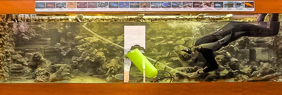 Aquarium Cleaning - last year