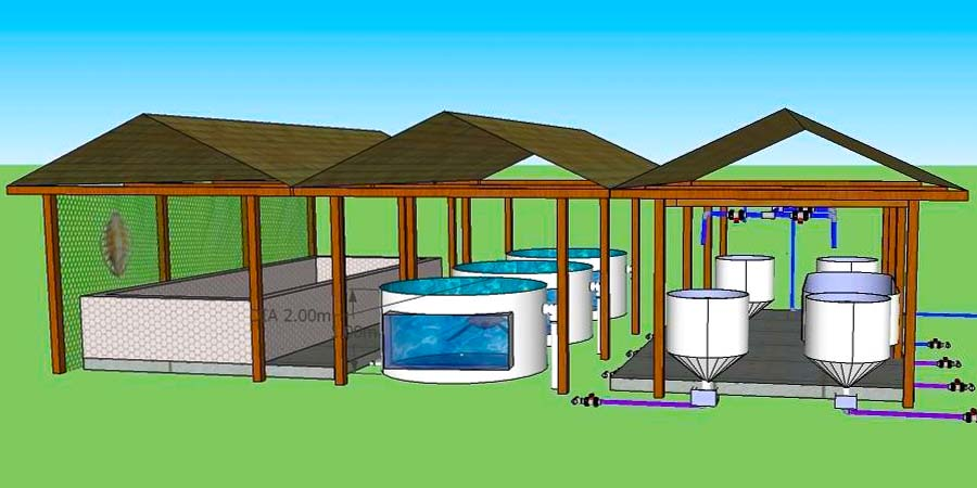 Turtle rehabilitation centre - our pool expansion plans