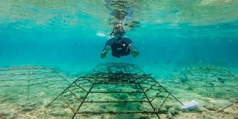 Coral Frames - making the turtle reef here in Kuda Huraa's lagoon