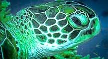 Maldivian Turtles – ID Programme & Workshop