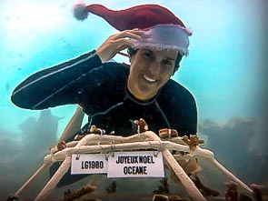 Happy Holidays from the Reefscapers team !
