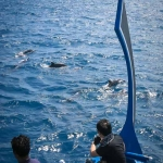 Guests watch dolphins on a trip to Vinnaney Faru