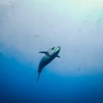 Tuna in the deep blue