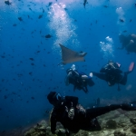 Divers surrounded by marine life