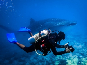 Diver photographing a Whale Shark (Fish Lab Facts & Explorer Excursions)