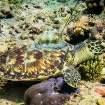 Mikka swims down to the sea floor