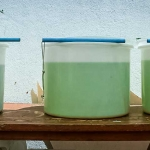 Fish Lab - Growing Cultures of Algae