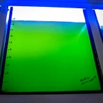 Fish Lab - Indoor Tank of Algae