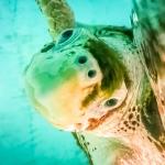 Rescue turtle Zahiya