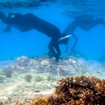 Coral Frame Maintenance