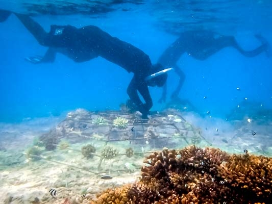 Coral Reef Propagation Projects