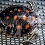 Green Turtle G56 Release at Makunudu