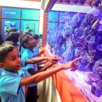 Maalhos School visit - marine aquarium