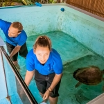 Turtle Pool Cleaning