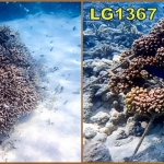 Coral Trail Coral Frames LG336 (Apr 2009) & LG1367 (Mar 2012)