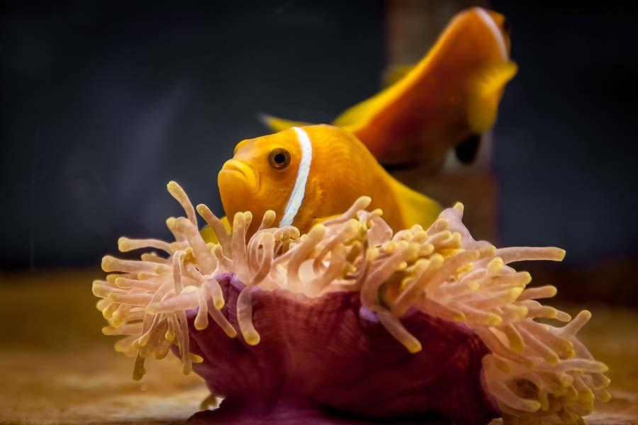 Clownfish Graduates and Marine Adventures