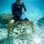 Weighing the coral frames to determine biomass