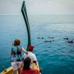 Dolphin-spotting Excursion