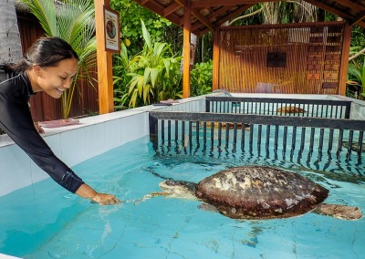 Marine Savers intern - Adrelia feeding the rescue turtles