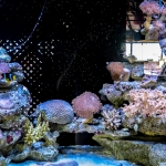 Marine Aquarium - second tank for soft corals