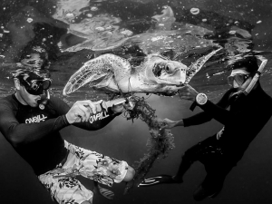 Mid-ocean turtle rescue (Monochromatic Marine Magic)