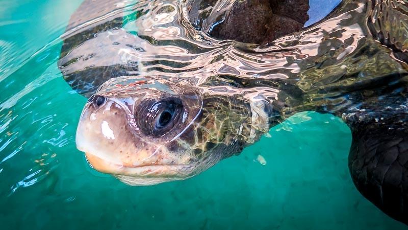 Turtle Rescue & Rehabilitation